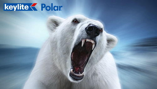Polar Bear | Wildlife illustration