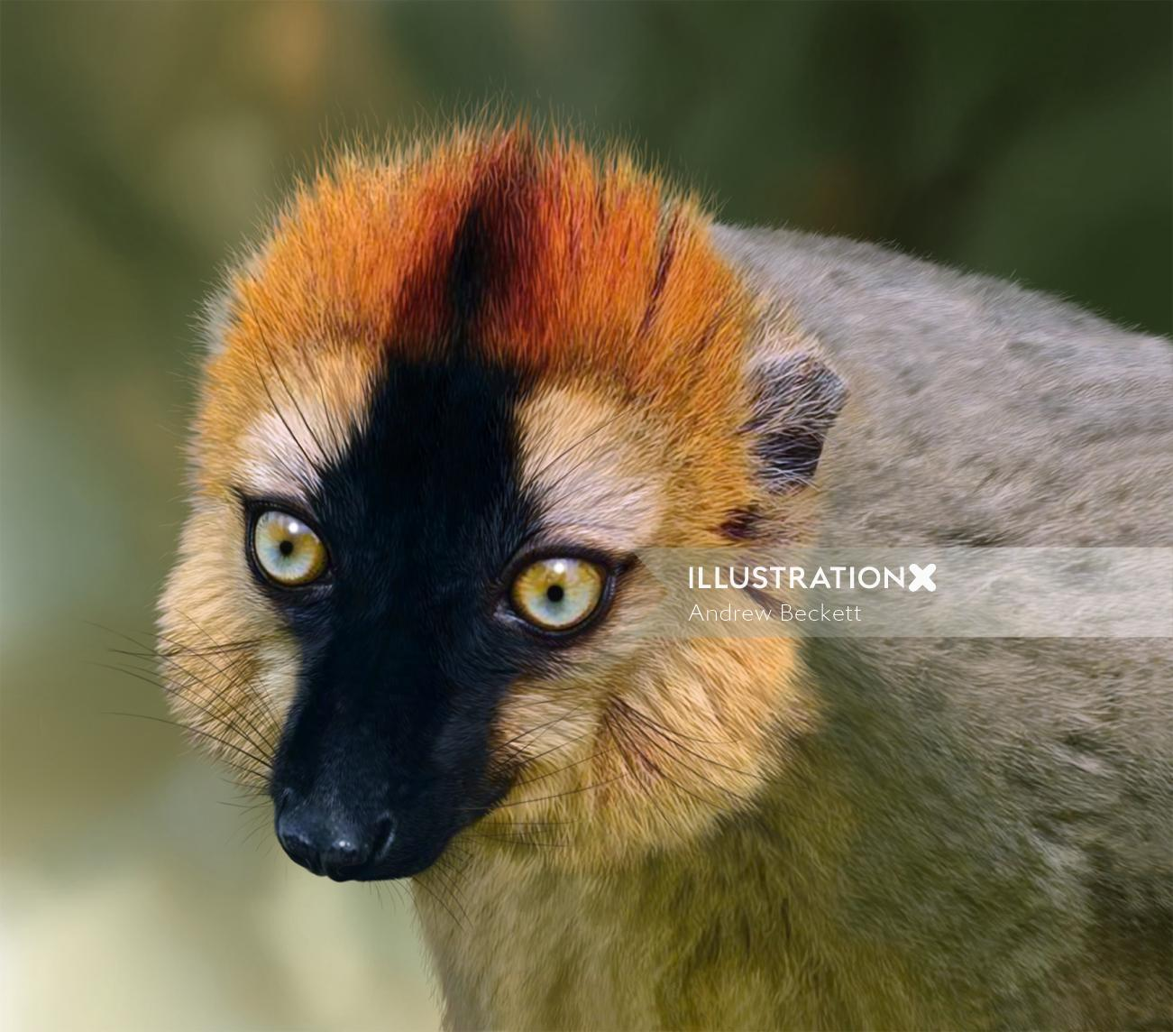 Re-fronted Brown Lemur illustration