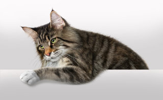 Photorealistic of cat by Andrew Beckett