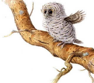Graphic design of Owl on tree branch