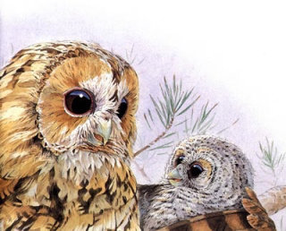 Graphic illustration of owl with baby owl