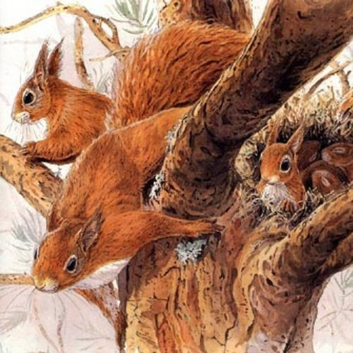 An illustration of squirrels on tree