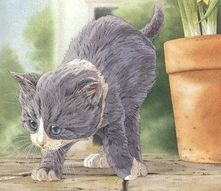 Cat graphic art