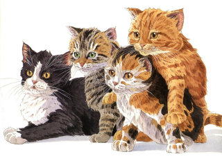 group of cats - Pet animals illustration