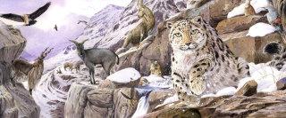 Wildlife Illustration By Andrew Beckett