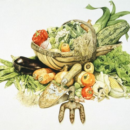 Graphical illustration of vegetabuls