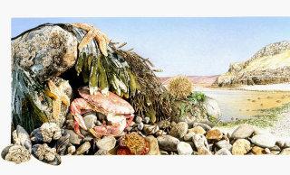 Beach side animals artwork by Andrew Beckett