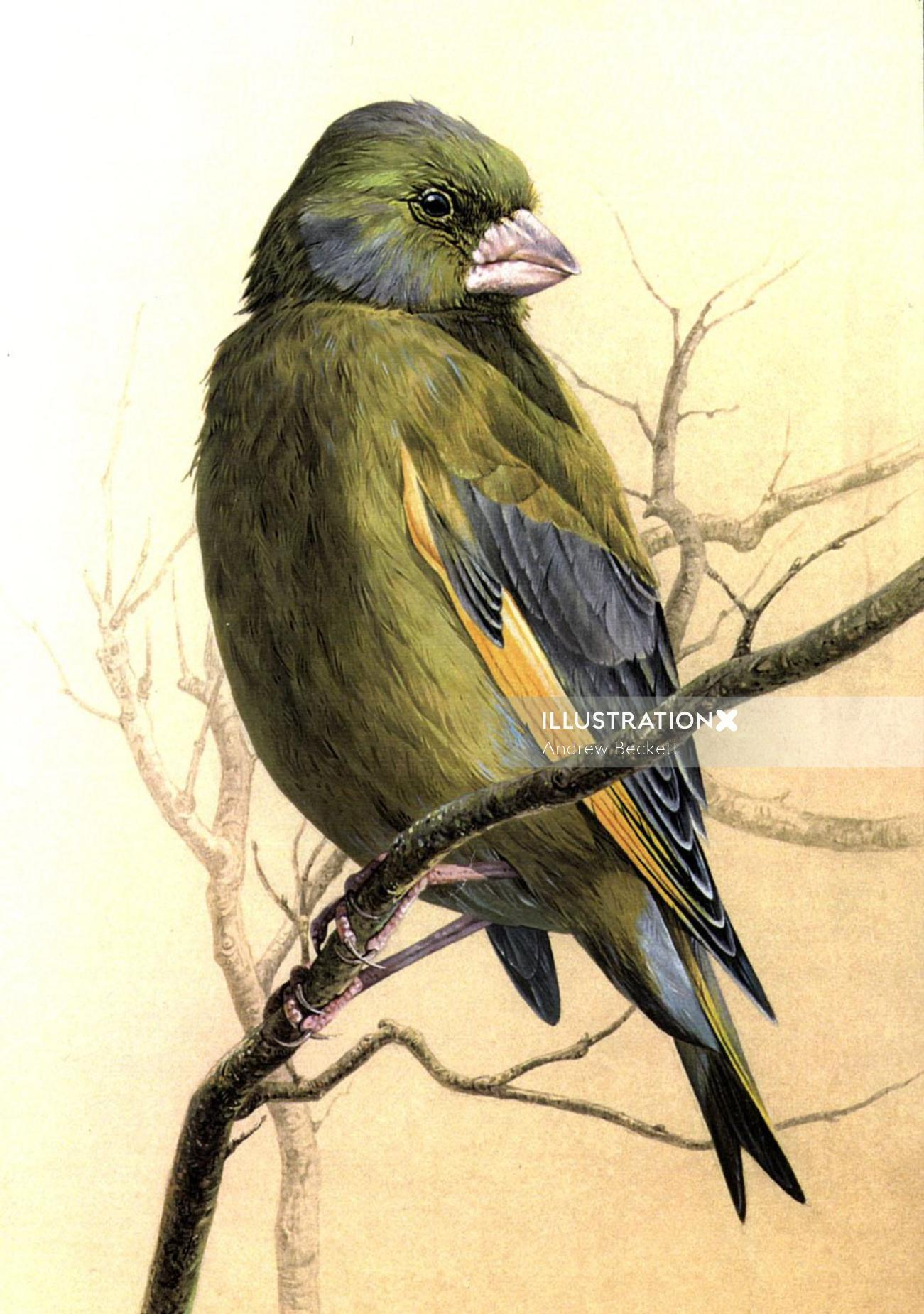 Graphic bird illustration by Andrew Becket