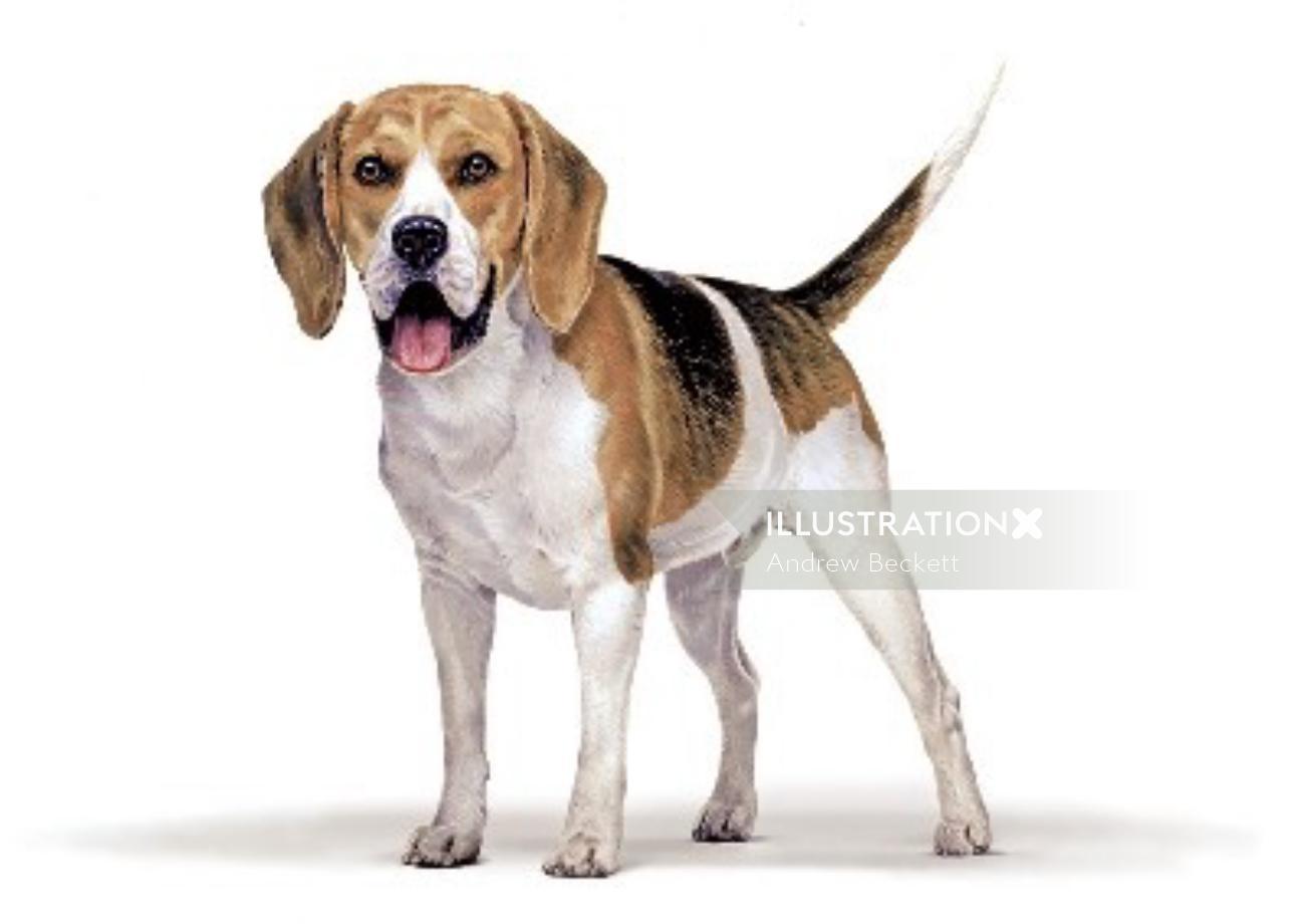 Beagle illustration by Andrew Beckett