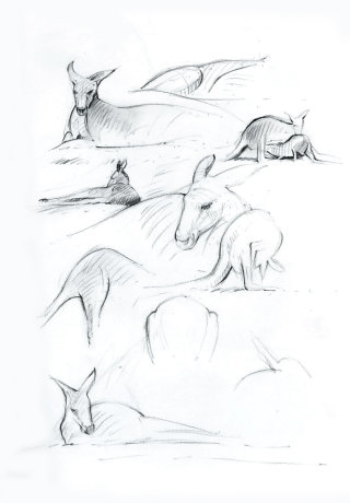 Pencil artwork for Kangaroos