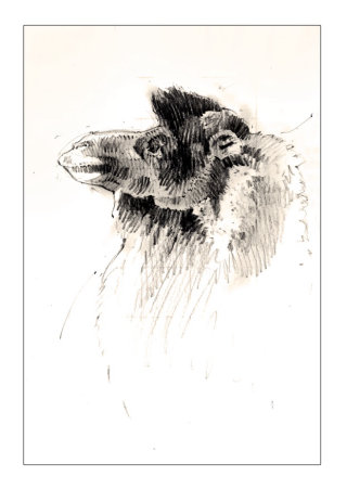 A funny artwork of Camel