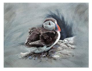 Puffin Bird Gouache Painting