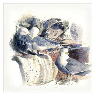 Watercolour Painting For Kittiwakes