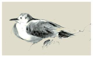 Line artwork for Seagull