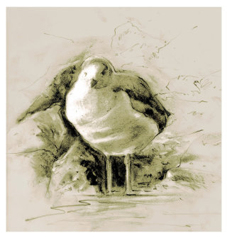An illustration for Seagull