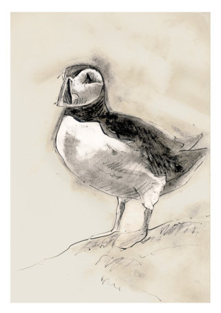 Charcoal sketch of a puffin