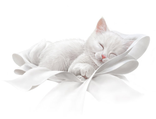White cat illustration for Kittensoft ultra soft toilet tissue by Andrew Beckett