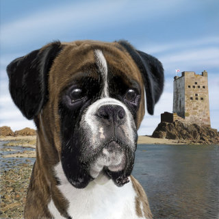 Portrait of Boxer dog illustration by Andrew Beckett