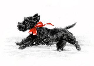 Black Dog - Animal Illustration