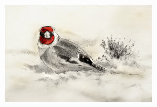 Goldfinch Christmas Card - An illustration by Andrew Beckett