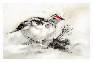 Ptarmigan Christmas card - An illustration by Andrew Beckett