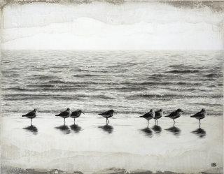 Dunlin birds illustration by Andrew Beckett