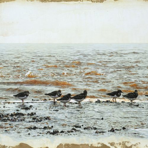 Photorealistic of Black-tailed Godwit by Andrew Beckett
