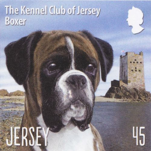 Boxer stamp for Jersey post - An illustration by Andrew Beckett