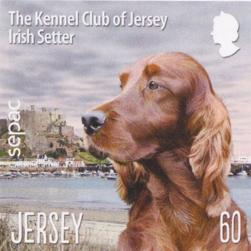 Labrador Retriever illustration for Jersey post stamps by Andrew Beckett