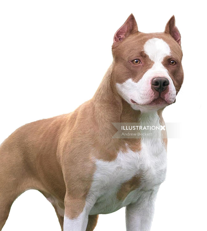 American Pitbull dog illustration by Andrew Beckett