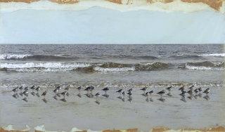 Birds at beach illustration by Andrew Beckett