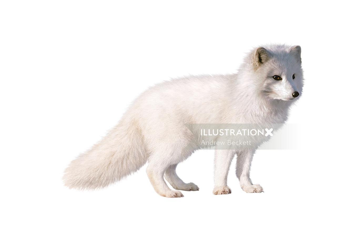 White fox fine art