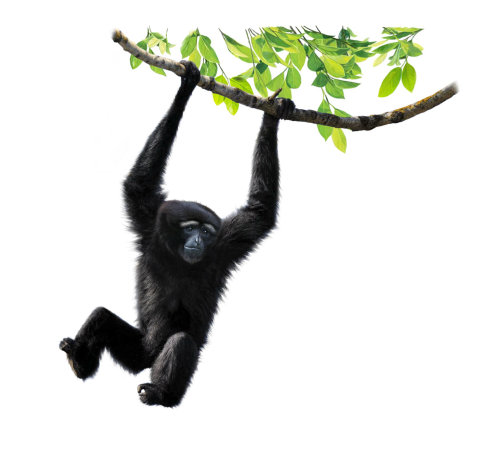 Artwork of a Chimpanzee hanging on a tree