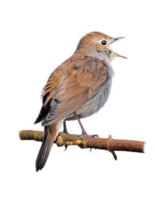 An artwork for a Sparrow