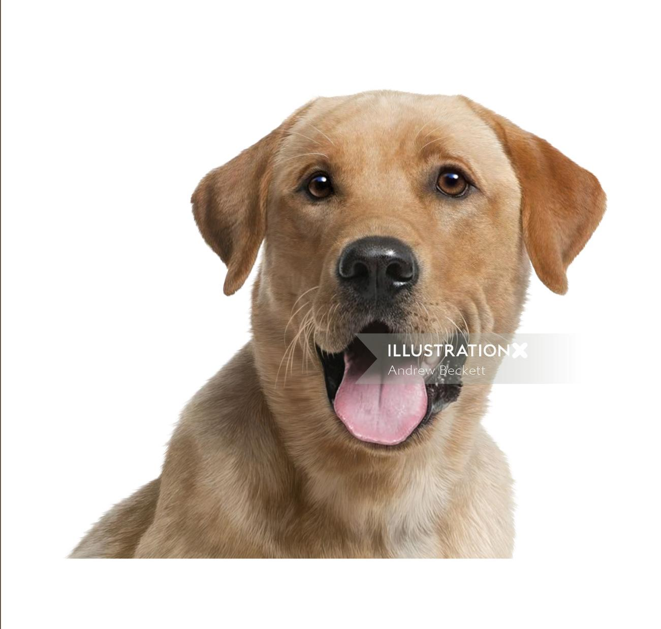 Pet Dog Illustration