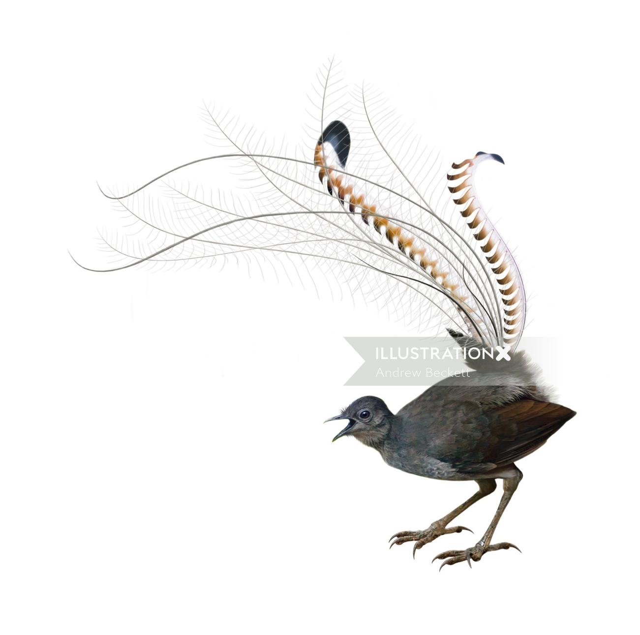 Bird illustration by Andrew Beckett