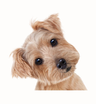 Puppy dog | Animals illustration