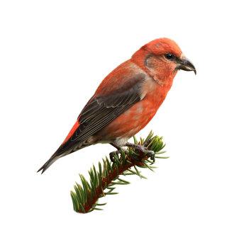 Artwork of a beautiful bird
