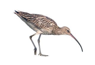 Illustration for a Crane