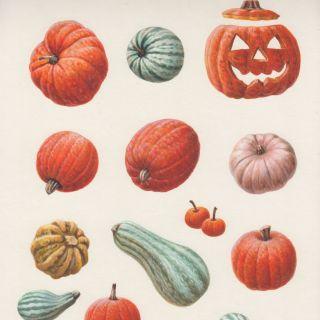 Pumpkins -  Food and Drink illustration