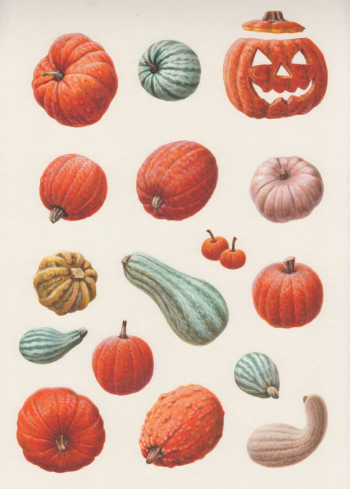 Pumpkins -  Food and Drink illustration