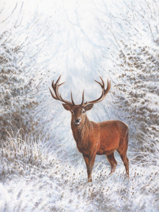 Winter Stag | Wildlife illustration