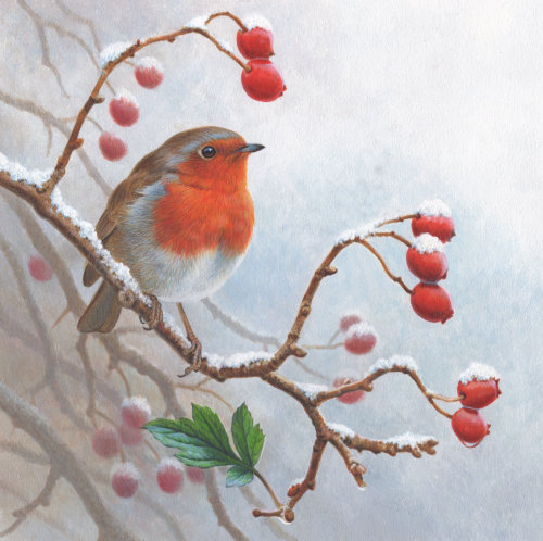 Winter Robin | Bird illustration