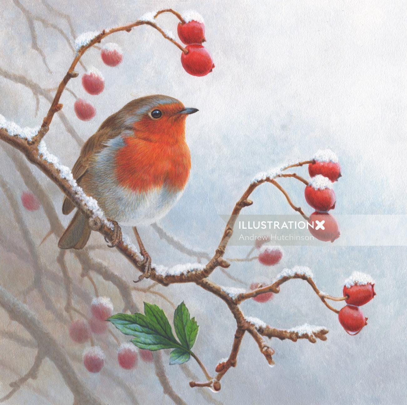 Winter Robin | Bird illustration