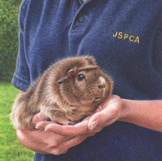 pet careing volunteers of Jersey Post