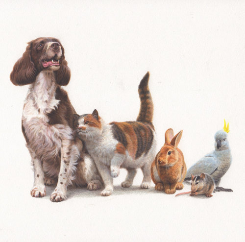 Oil painting of pets for Jersey Post
