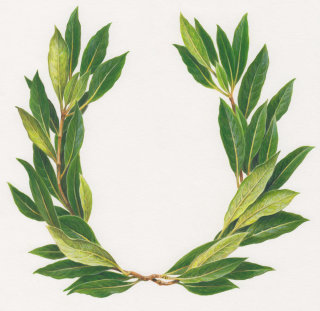 Realistic art of laurel wreath
