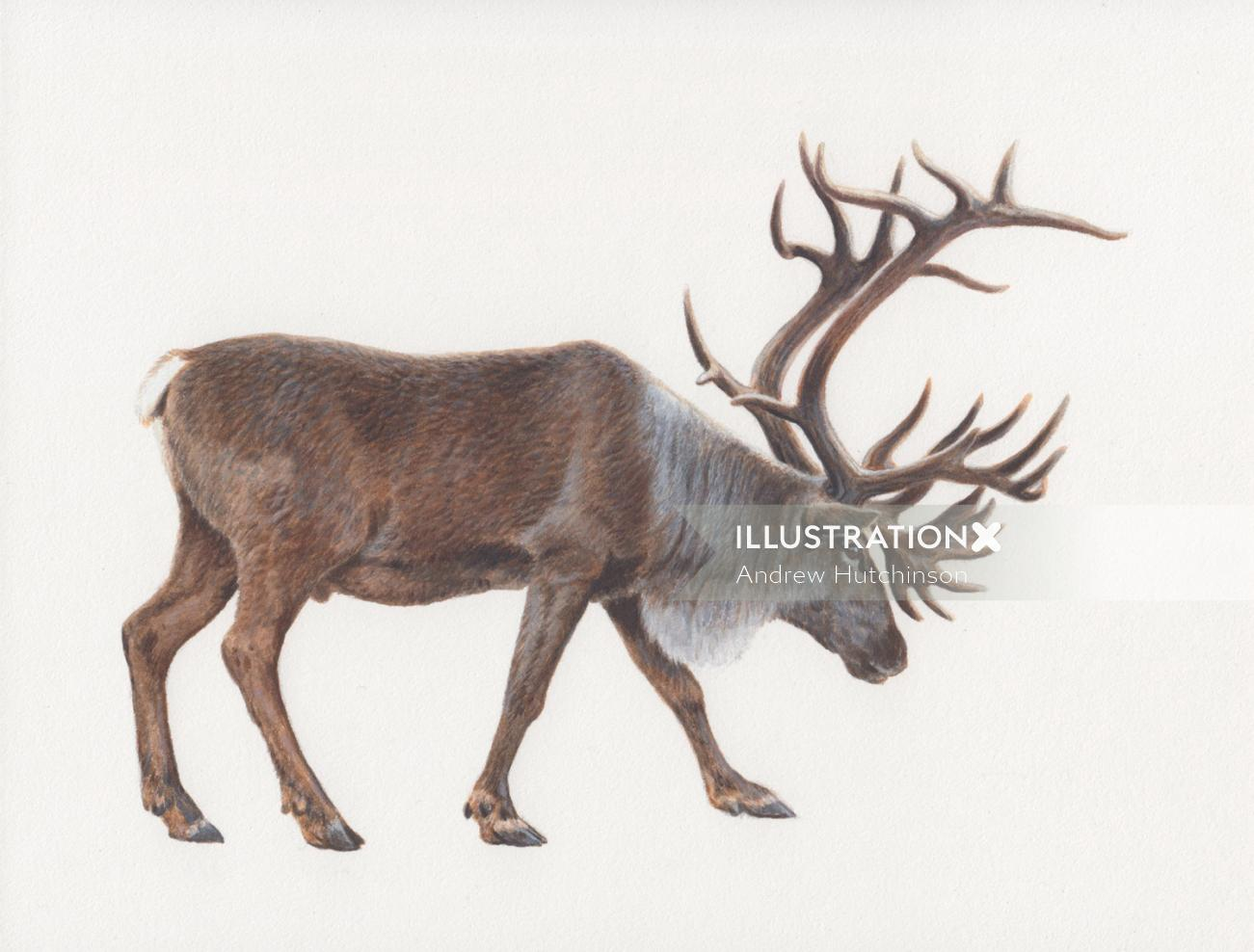 caribou photorealistic by Andrew Hutchinson