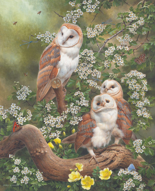 Nature barn owl & bees