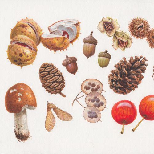 Acrylic woodland fruit